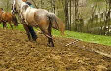 Free Horses And Plough Royalty Free Stock Photo - 14279655