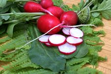 Garden Radish Royalty Free Stock Photos