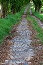 Free Road Stock Photo - 14283020