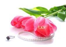 Free The Pink Tulips  Isolated On A White Background Royalty Free Stock Image - 14280816