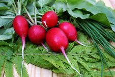 Free Garden Radish-vitamins Vegetables Stock Photo - 14281530
