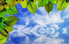 Free Bright Green Leaves On Blue Sky Royalty Free Stock Photos - 14282048