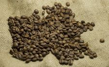 Free Coffee Beans Stock Photography - 14284032
