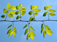 Free Green Leafs Under The Blue Sky Royalty Free Stock Photo - 14284085