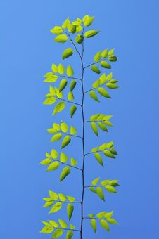 Free Green Leafs Under The Blue Sky Stock Photos - 14284233