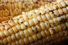 Paked Corn Stock Image