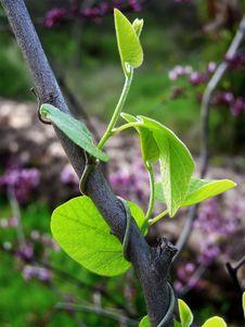 Free Climbing Vine Stock Image - 14286491