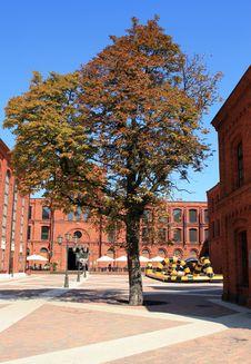 Free Autumn Tree Stock Photo - 14287900