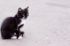 Free Kitten Royalty Free Stock Photography - 14288117