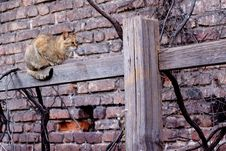 Free Cat On Fence Royalty Free Stock Image - 14288166