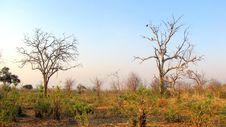 Free Chobe National Park Stock Photography - 14288902