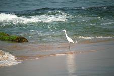 Free Snowy Egret Stock Photos - 14288993