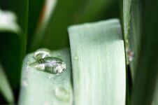 Water Drops On Long Leaf Royalty Free Stock Photo