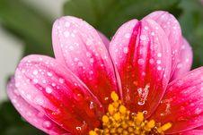 Free Petals Stock Image - 14289291