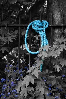 Blue Rope And Flowers In Black And White Royalty Free Stock Photo