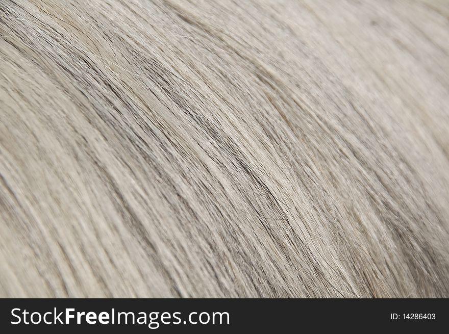 Grey, white and dark hairs close-up