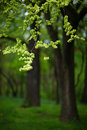 Free Spring Foliage Royalty Free Stock Photography - 14291327