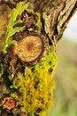 Free Close-up Bark Stock Photos - 14296903