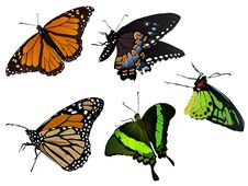 Free Butterfly Royalty Free Stock Photo - 14291945