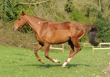 A Horse Running In Field Stock Images