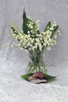 Lily Of The Valley And Snail Royalty Free Stock Photos