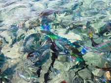 Free Colorful Fish In Sea Royalty Free Stock Photo - 14293625