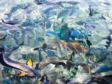 Free Colorful Fish In Sea Royalty Free Stock Image - 14293636