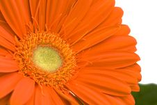 Free Close Up Of Orange Gerbera Stock Image - 14295241