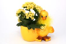 Easter Chick With Flowers Royalty Free Stock Photo