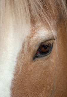 Free Eye Of A Brown Horse Royalty Free Stock Photos - 14295538