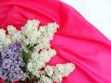 Free Lilac Stock Photography - 14295712