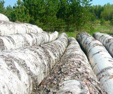 Free Birch Logs On A Sawmill. Stock Photography - 14296282