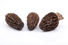 Free Morel Mushrooms Stock Images - 14296504