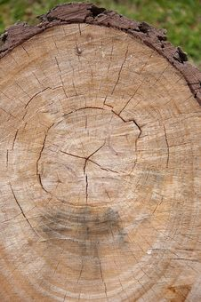 Free Tree Felled Royalty Free Stock Photos - 14297048