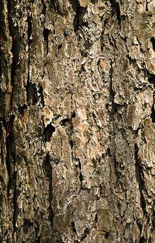 Free Close-up Bark Stock Photos - 14297133