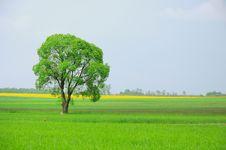 Free Tree On Field Royalty Free Stock Image - 14297486