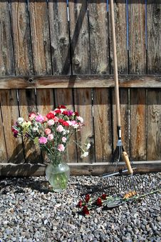 Stock Image Of Garden Tools With Carnations Stock Photography