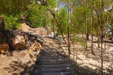 Free Pathway In Jungles Stock Photography - 14298572