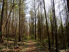 Free Viehleite Hill Pirna Royalty Free Stock Photos - 142991408