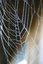 Free Spider Stock Images - 1432914