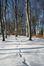 Free Winter Forest Stock Image - 1434141