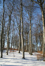 Free Winter Forest Stock Photos - 1434183