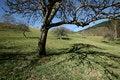 Free Lonely Tree Shades Royalty Free Stock Photo - 1434935