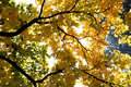 Free Gold Autumn Stock Photos - 1435243