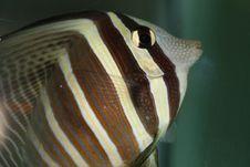 Free Fish Stock Image - 1430321