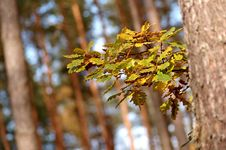 Free Autumn In Forest Royalty Free Stock Image - 1431476
