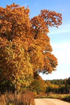 Free Autumn Landscape Stock Images - 1431524