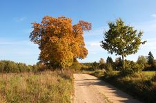 Free Autumn Landscape Royalty Free Stock Photography - 1431527