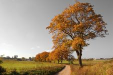 Free Autumn Landscape Stock Photos - 1431533
