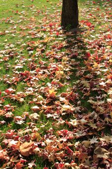 Free Carpet Of Autumn Sheets Stock Image - 1431861
